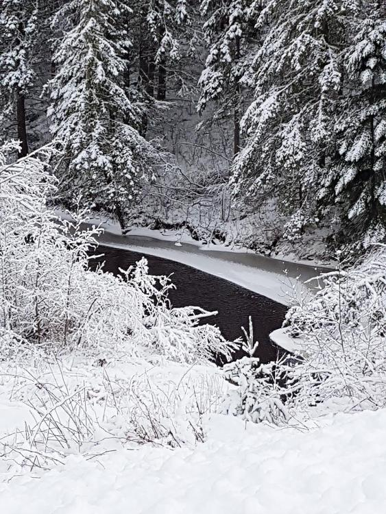 Snow.thumb.jpg.837d951f02edc276348ee712e80f4566.jpg