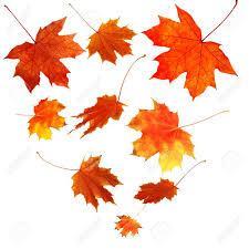 Leaves.jpg.2fc940d75e89387d8224eba3281d11b9.jpg