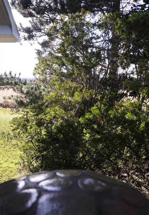 View.thumb.jpg.3629d0b2faa512aef6e95b4b41555771.jpg